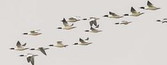 bardia national park by Steve Dinicol