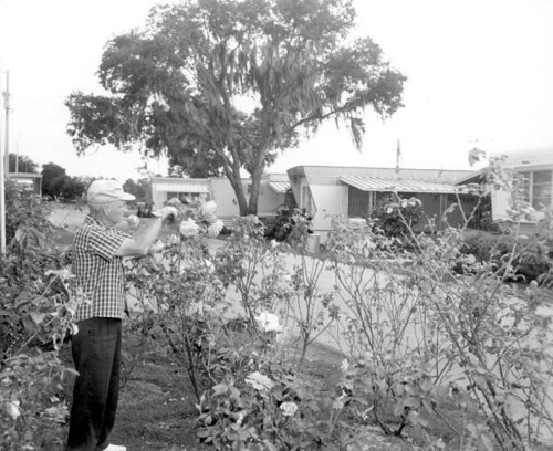 Mr. Paul E. Linthieum tends to the garden near the trailers: Fort Lauderdale, Florida | by State Library and Archives of Florida