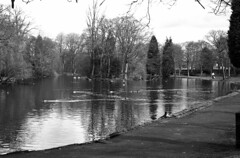 Victoria Park, the lake