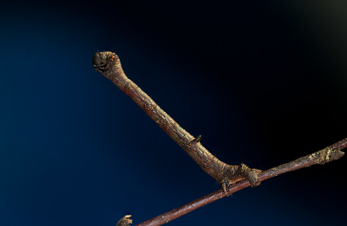 A twig, clearly. | by Stephen Begin
