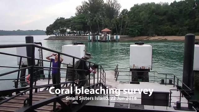 Mass coral bleaching survey at Small Sister's Island, 22 Jun 2016