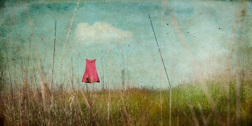 Wallflower | by jamie heiden