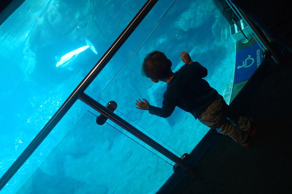 101615_aquarium10