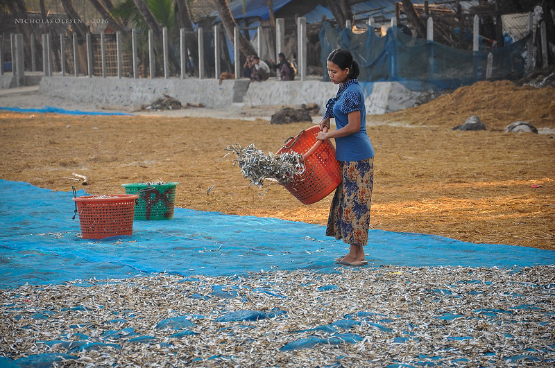 Ngapali Beach: Drying Fish