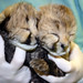 2-day-old cheetah cubs