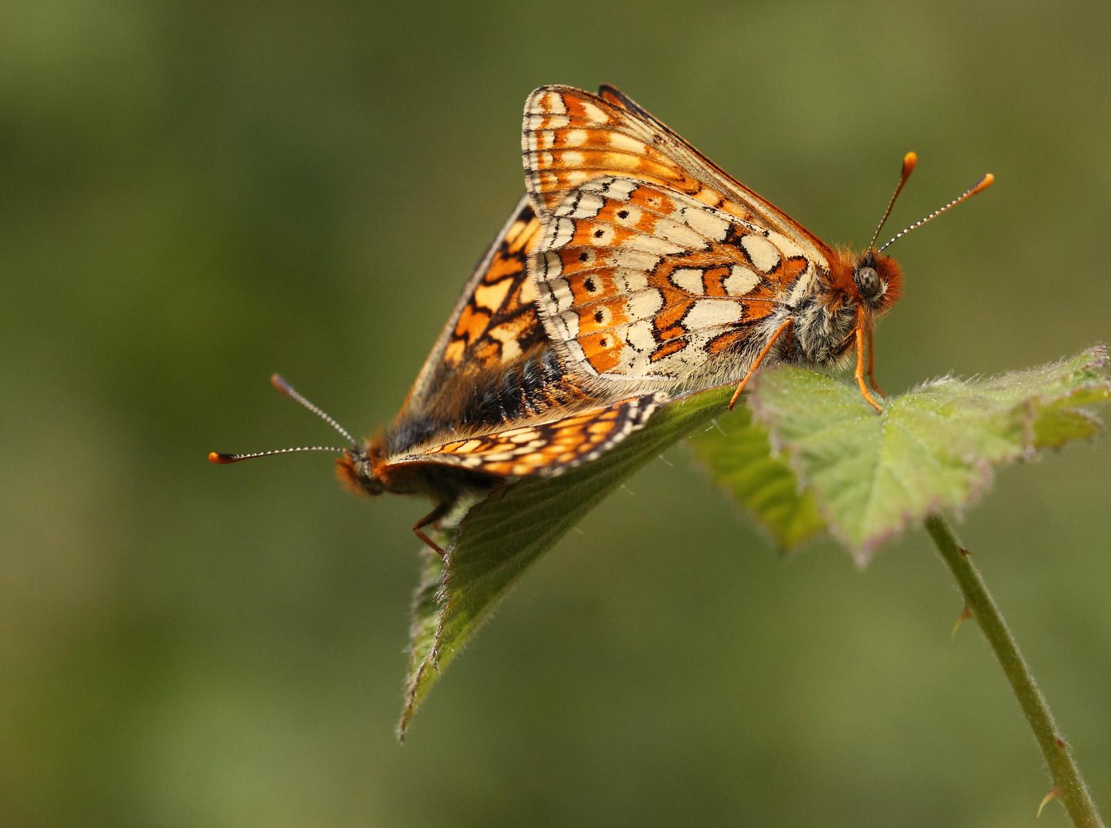 butterfliesandrooks0075