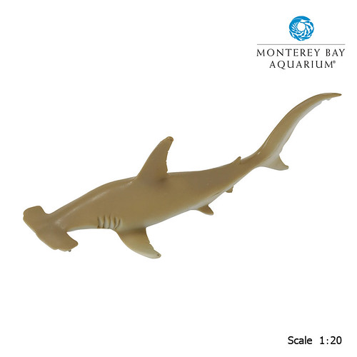 Hammerhead Shark | by Safari Ltd.®