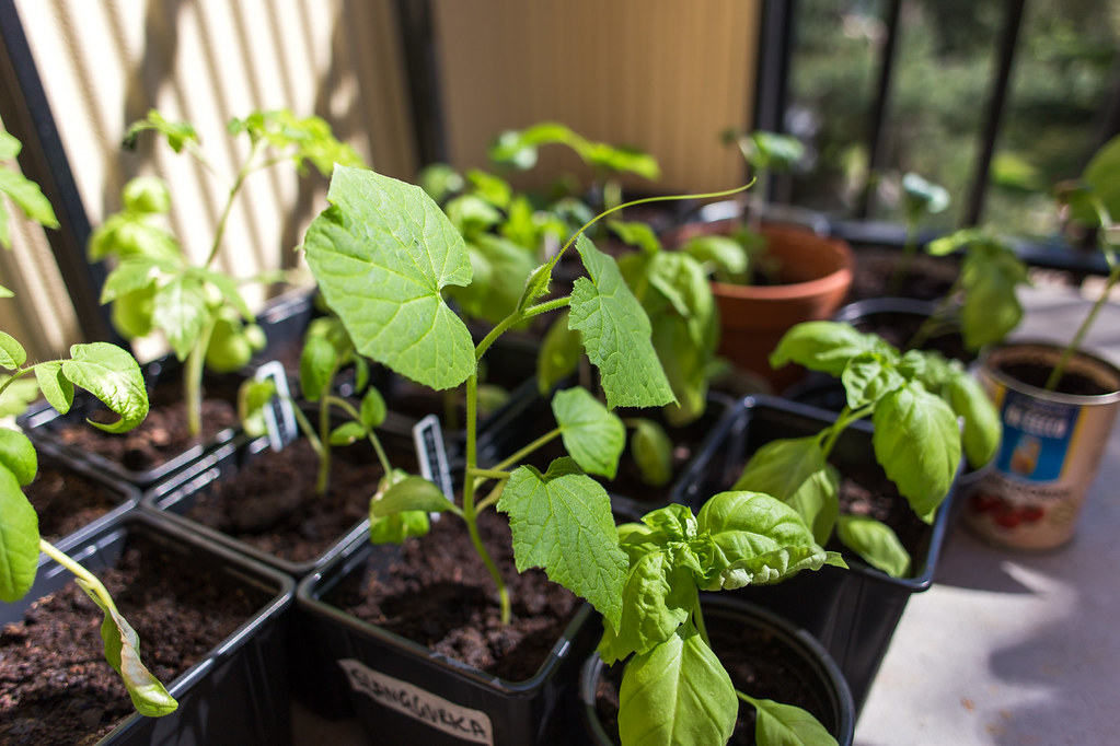 My plants – May