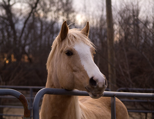 A beautiful Palomino that caught my eye. | by Diane G. Zooms---Mostly Off