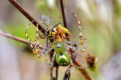Nectaring Hazards by canopydweller