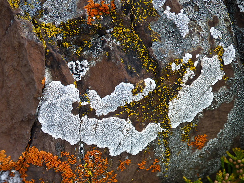 Lichens from Marsden Creek, Kananaskis | by annkelliott
