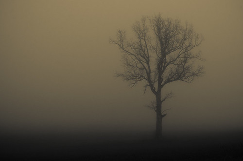 Lonely tree in fog | by ulfbjolin