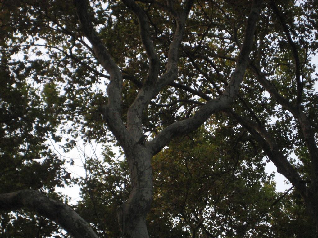 Parakeet in Gulhane Park (IB28) | by Arthur Pennant