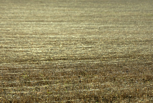 Field of the Cloth of Gold | by SteveJM2009