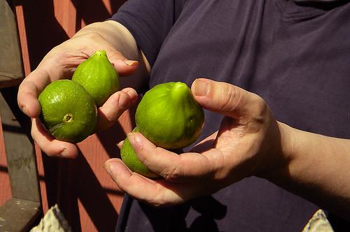 Kamal's figs