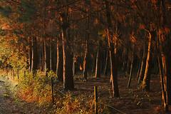 Los últimos rayos de sol by Tiene patitas