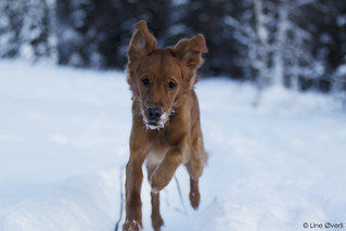 Running in the snow | by Lineovand