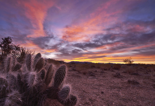 A Cactus Dreams in Color | by Cliff_Baise