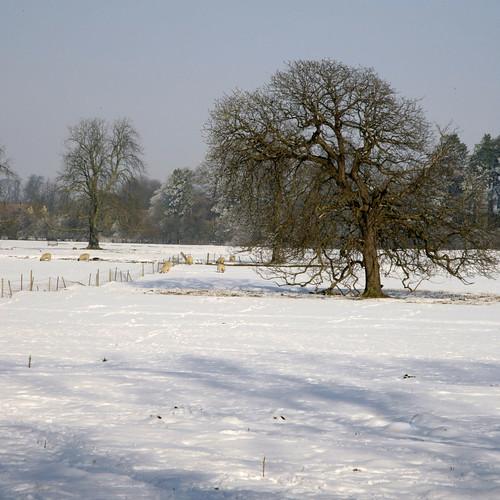 A WINTER CONSTABLE | by Adam Swaine