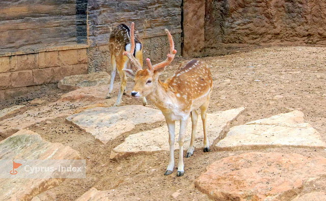 Limassol-Zoo-Cyprus-Index-024