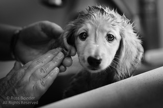 Bath Time | by Russ Beinder