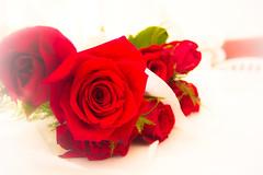Flowers of Love by Francisco J Calvo