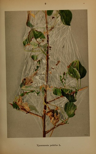 n76_w1150 | by BioDivLibrary