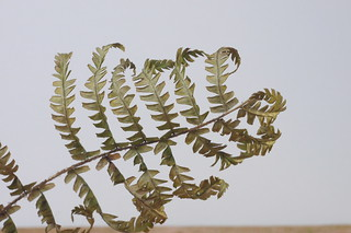 Experiment - On Canvas - P1470153 - Drying Fern | by Rusty Marvin - JohnWoracker.com