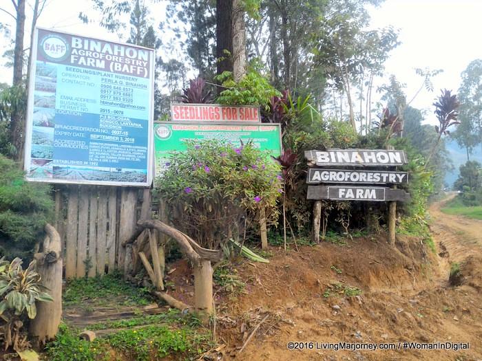 LivingMarjorney-Binahon-Agroforestry-Farm-Bukidnon (4)