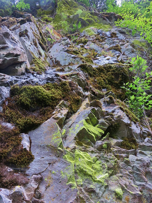 Lichen covered rocks along the Lewis River Trail