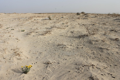 undp-kuwait-environment-energy-desert-flower-sustainability-nasser-alqatami | by undpkuwait
