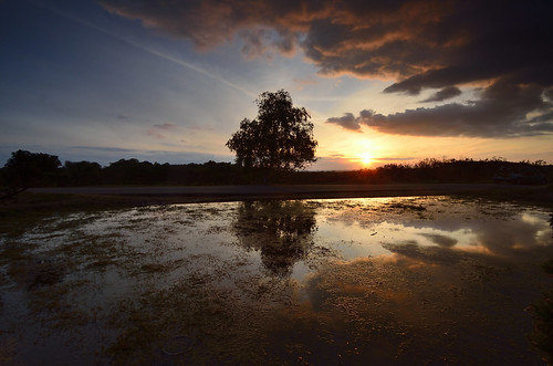 New Forest Sunset | by Garry1968