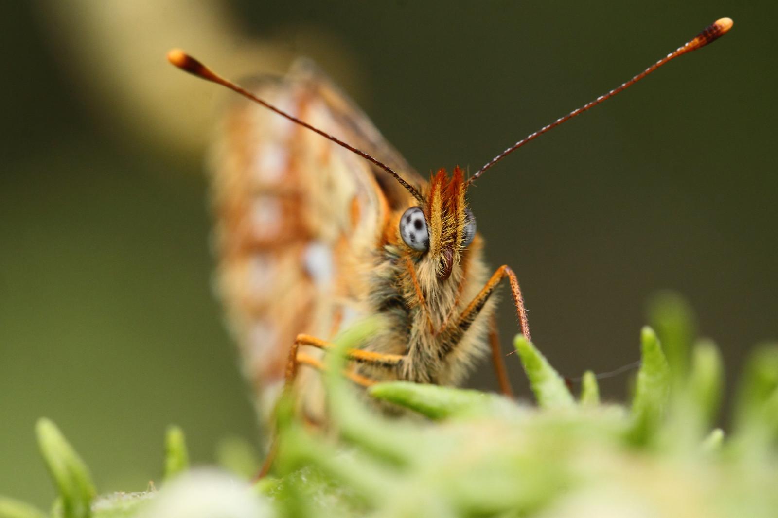 butterfliesandrooks0042