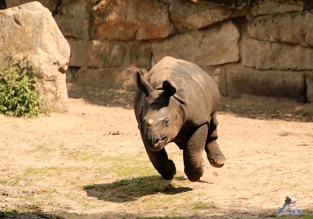 Tierpark Berlin 29.05.2016   0117