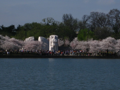 Cherry Blossoms and MLK | by brownpau