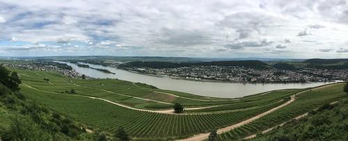 Rhine Panorama (Rüdesheim Edition)