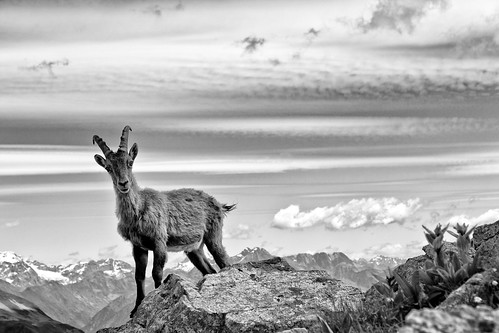 IBEX in B&W | by Jacopo.Colombo
