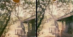 morning oaks by lawatt