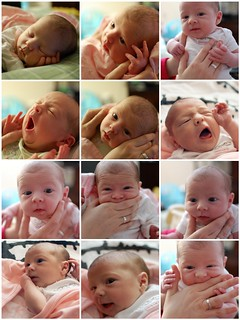 Lila- 2 weeks old | by twoceeveeandme