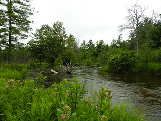 Little Manistee River