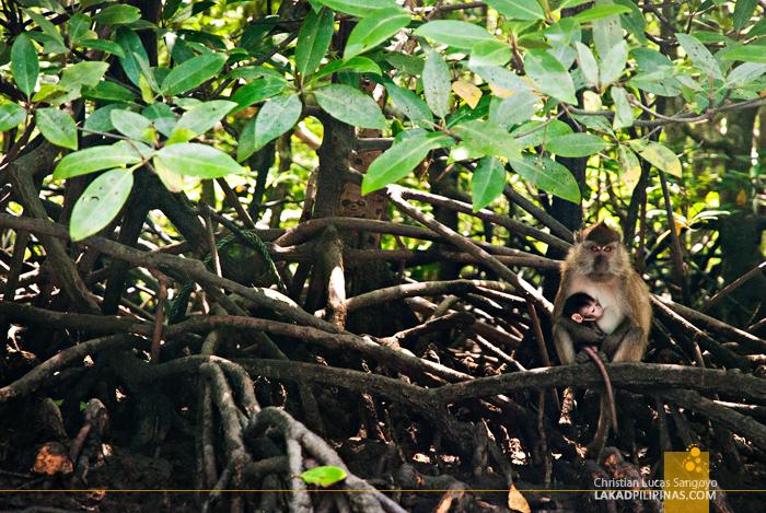 Kilim Karst Geoforest Park Langkawi Mangrove