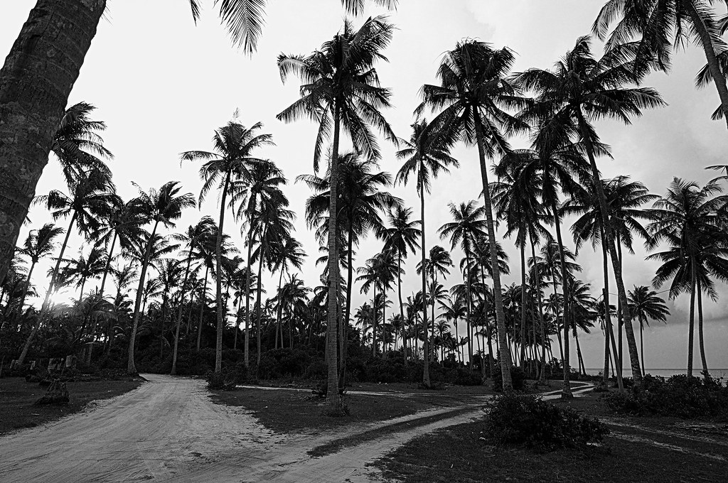 Palm Trees Black And White Black Amp White Palm Tree