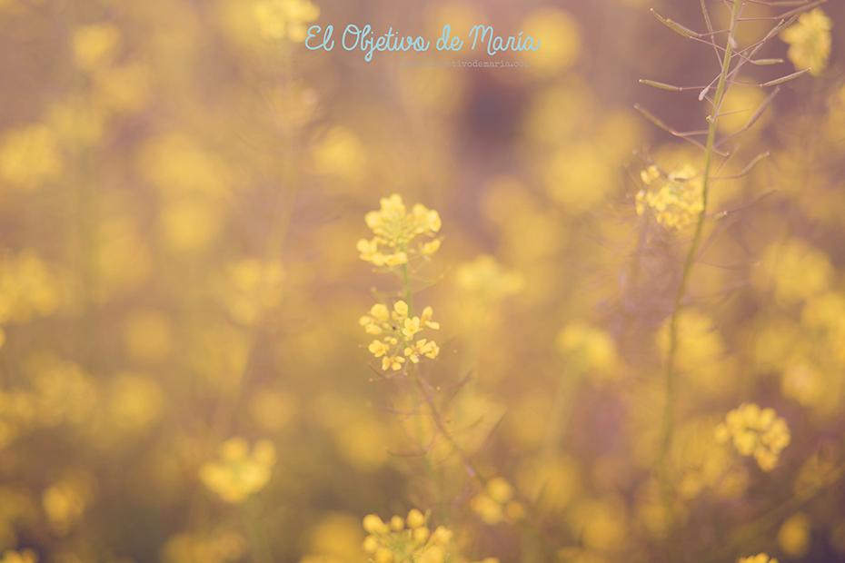 una flor es amarilla