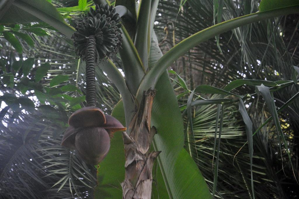 Ботанический сад DSC_0051