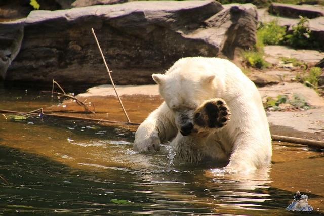 Tierpark Berlin 28.05.2016  053