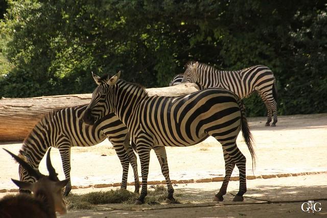 Sonntags-Besuch Zoo Berlin 03.07.201622