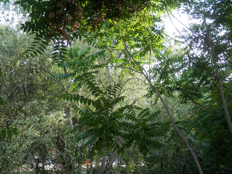 Selva del Huerva