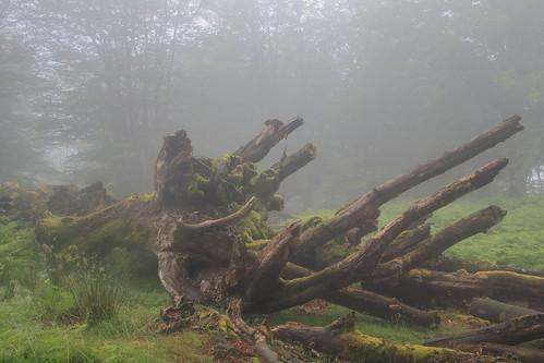 Parque Natural de #Gorbeia #Orozko #DePaseoConLarri #Flickr - -489