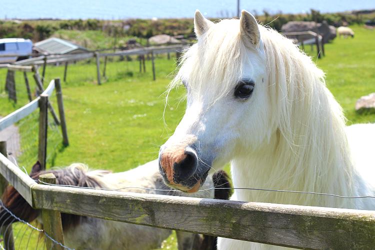 horse_ireland