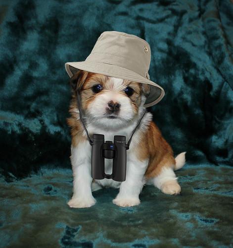 Pip the Birding Dog